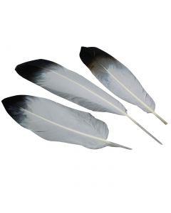 Zwaan schouder - 15-20 cm - wit met zwarte punt