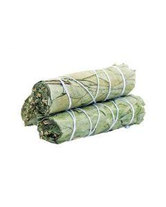 Eucalyptus Sage 10cm