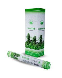 Green Tree Cannabis Incense